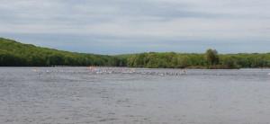 Harryman Tri 2013 - Swim